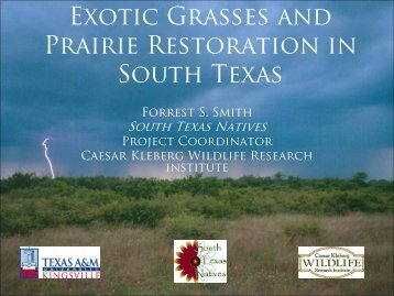 Native Prairie Restoration in South Texas - Caesar Kleberg Wildlife ...