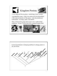 Protista 2.pdf