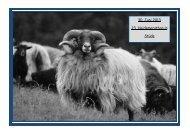 30. Juni 2013 23. Heidemarathon in Stüde - LC-BlueLiner