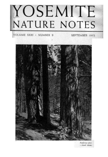 "(September 1952) [PDF] ""Ponderosa Pines,"" 31(9) - Yosemite Online"