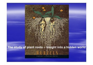 The study of plant roots – insight into a hidden world