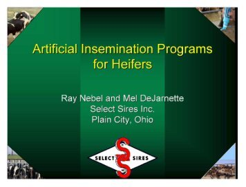 Artificial Insemination Programs for Heifers