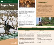 Canada Geese - Ontario Soil and Crop Improvement Association