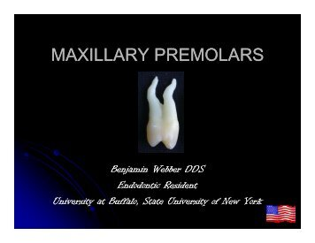 Maxillary Premolars PER 811 Dr. Webber.pdf - University at Buffalo