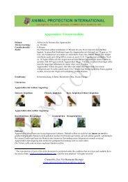 Agaporniden / Unzertrennliche - Akademie für Tierschutz