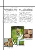 SCHERING (Euphorbiaceae #10) (Page 1) - LAP - Universitat ... - Page 5