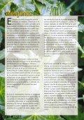 SCHERING (Euphorbiaceae #10) (Page 1) - LAP - Universitat ... - Page 6