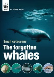 Small Cetaceans: The Forgotten Whales