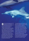 Small Cetaceans: The Forgotten Whales - Page 2