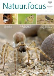 Natuurfocus 2009-01 Bruine vuurvlinder - Natuurpunt