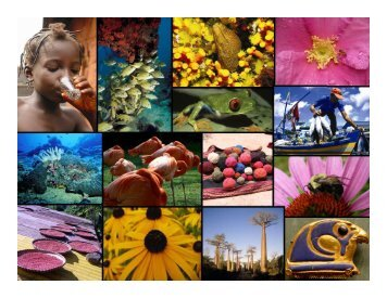 International Year of Biodiversity - Convention on Biological Diversity