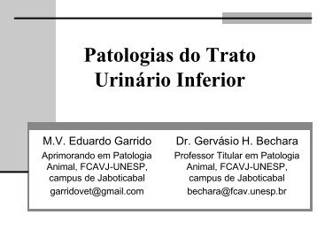 Patologias do Trato Urinário Inferior - Unesp