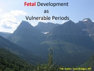 Fetal Development as Vulnerable Periods - National Birth Defects ...