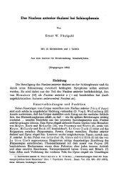 Der Nucleus anterior thalami bei Schizophrenie - Atlas of the Human ...
