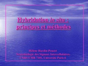 Hybridation In Situ