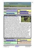 4 dagar safariprogram med Serengeti i Tanzania - Dahl Safaris - Page 4