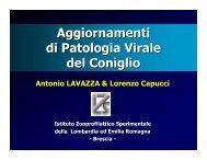 Malattia Emorragica Virale del Coniglio (RHD) - IZS della Lombardia ...