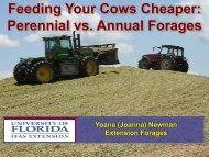 Feeding Your Cows Cheaper: Perennial vs. Annual Forages