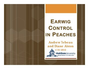 EARWIG CONTROL IN PEACHES - Utahhort.org