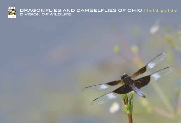 Dragonflies and Damselflies of Ohio - Ohio Department of Natural ...