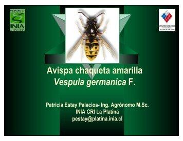Avispa chaqueta amarilla Vespula germanica F. - Platina - INIA