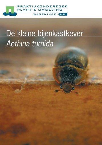 De kleine bijenkastkever Aethina tumida - Wageningen UR