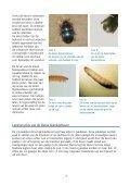 De kleine bijenkastkever Aethina tumida - Wageningen UR - Page 4