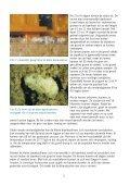 De kleine bijenkastkever Aethina tumida - Wageningen UR - Page 5