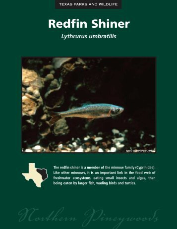 Redfin Shiner - The State of Water