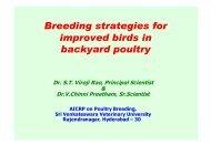 Breeding strategies for improved birds in backyard poultry