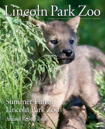 Summer Fun at Lincoln Park Zoo