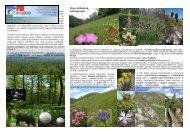 Az erdőségek Füves élőhelyek, sziklagyepek - Duna-Ipoly Nemzeti ...