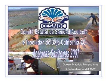 resultados del cultivo de camaron en baja california 2007