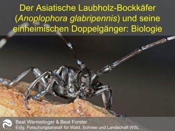 Der Asiatische Laubholz-Bockkäfer (Anoplophora glabripennis) und ...
