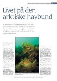 Livet på den arktiske havbund - Aktuel Naturvidenskab