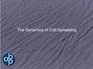Assay for Cell-ECM Interactions