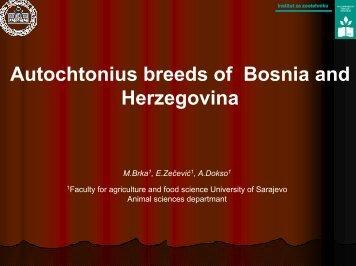 Autochtonius breeds of Bosnia and Herzegovina - dagene