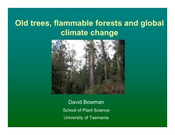 Old trees, flammable forests and global climate change