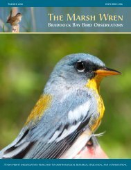 Summer 2010 - Braddock Bay Bird Observatory
