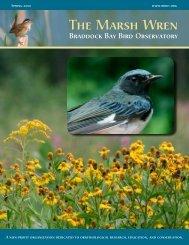 Spring 2010 - Braddock Bay Bird Observatory