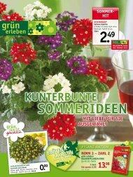Sommer - Gartencenter Odenwald