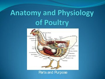 Anatomy and Physiology of Poultry - U.S. Poultry and Egg Association