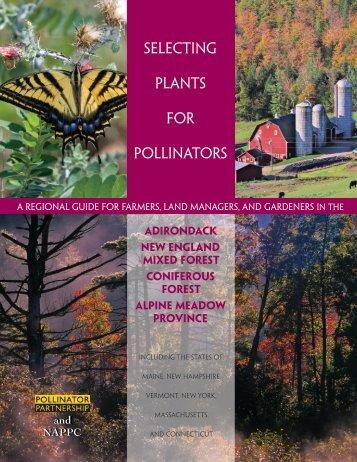 Adirondack - Pollinator Partnership