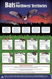 Bats of the NWT poster