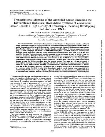 Transcriptional Mapping of the Amplified Region Encoding the ...