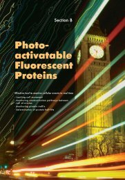 Photo- activatable Fluorescent Proteins - Evrogen