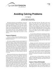 Avoiding Calving Problems - Department of Animal Science - Texas ...