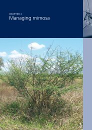 Chapter 2. Managing mimosa - Weeds Australia