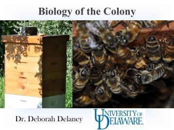 Biology of the Colony