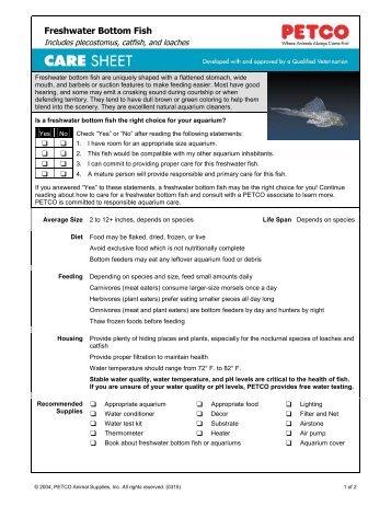 Mollies petco for Freshwater fish petco